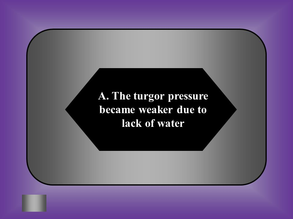 A. The turgor pressure became weaker due to lack of water