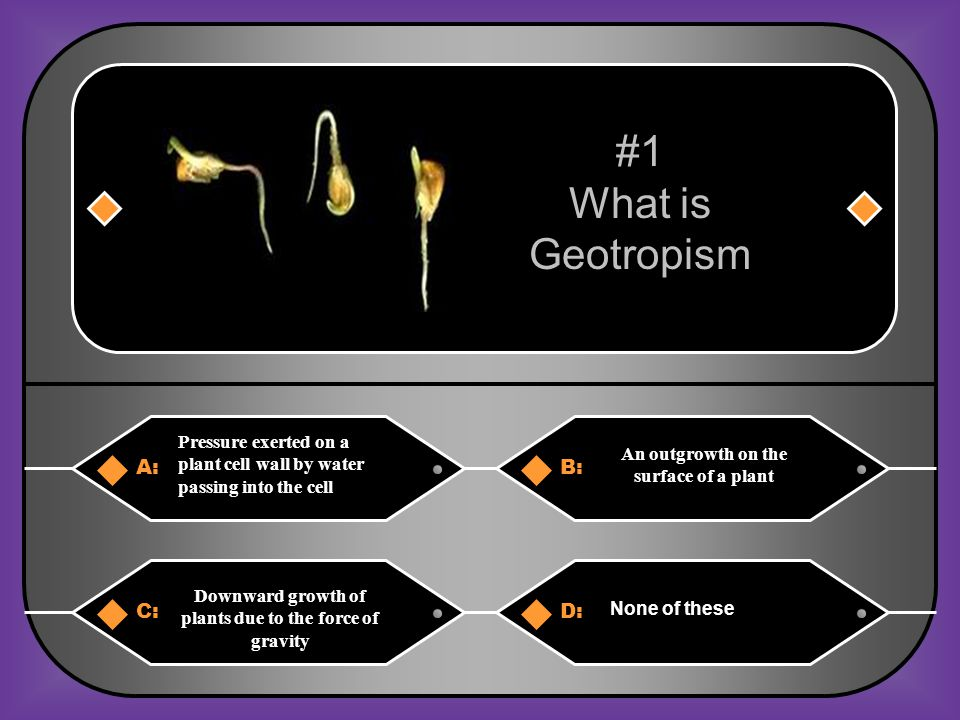 #1 What is Geotropism A: B: C: D: