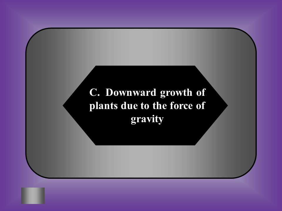 C. Downward growth of plants due to the force of gravity