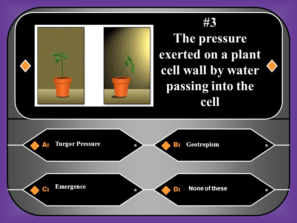 #3 The pressure exerted on a plant cell wall by water passing into the cell. Turgor Pressure. A: B: