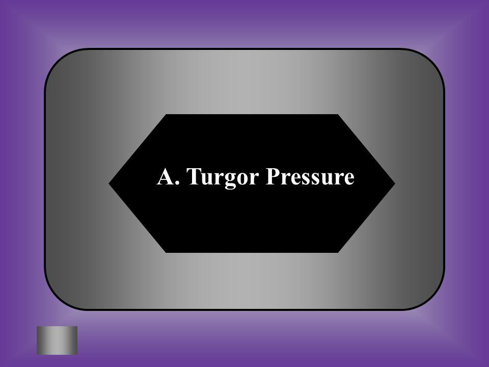 A. Turgor Pressure