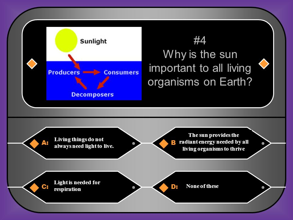 Why is the sun important to all living