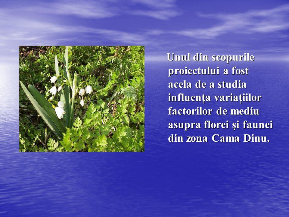 Unul din scopurile proiectului a fost acela de a studia influenţa variaţiilor factorilor de mediu asupra florei şi faunei din zona Cama Dinu.