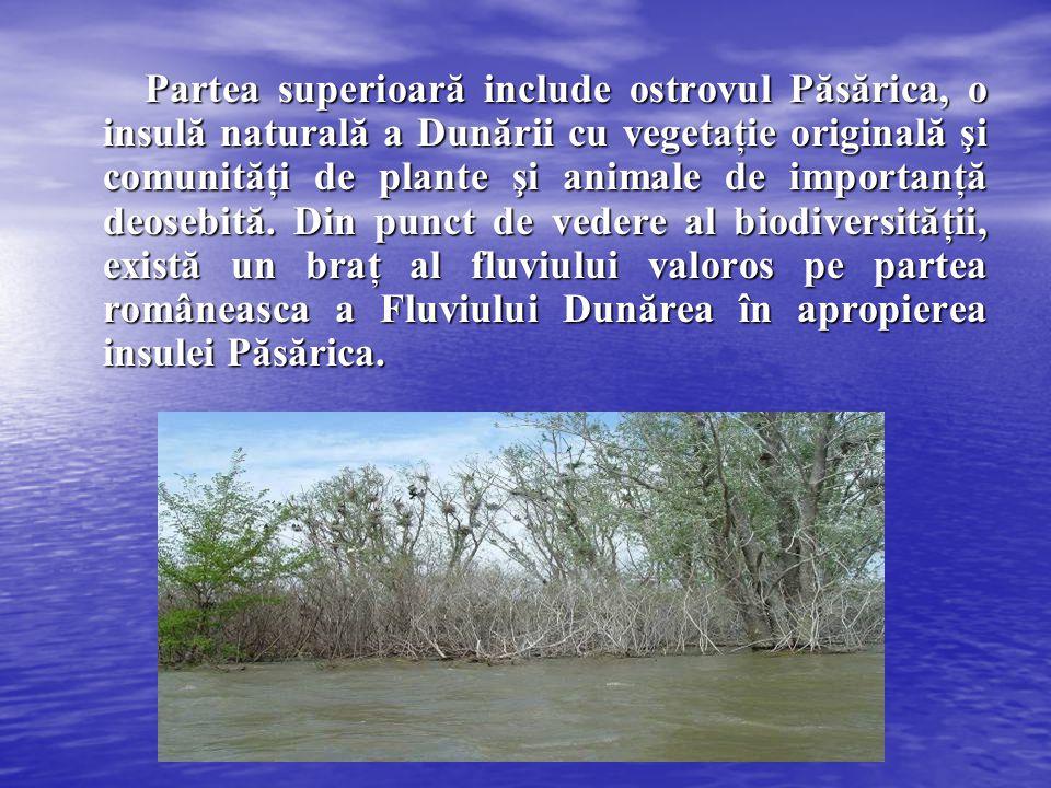 Partea superioară include ostrovul Păsărica, o insulă naturală a Dunării cu vegetaţie originală şi comunităţi de plante şi animale de importanţă deosebită.