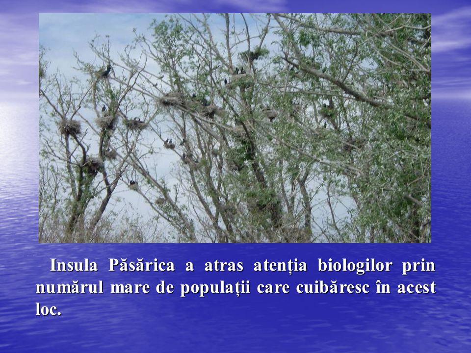 Insula Păsărica a atras atenţia biologilor prin numărul mare de populaţii care cuibăresc în acest loc.