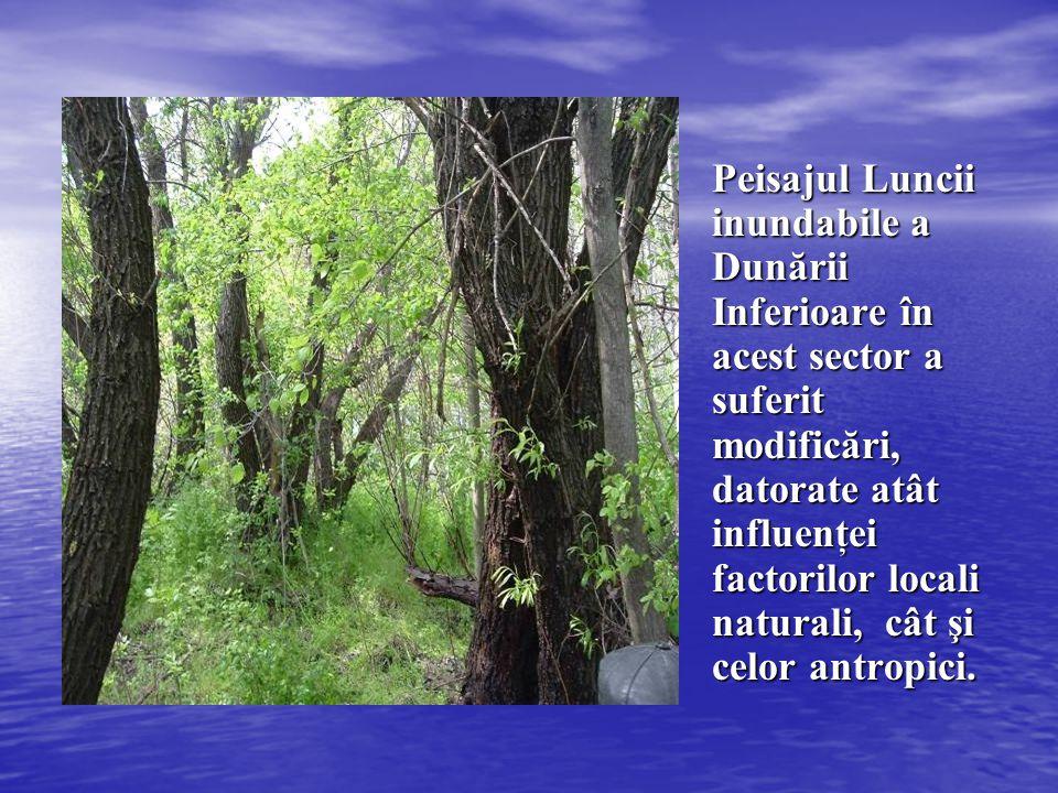Peisajul Luncii inundabile a Dunării Inferioare în acest sector a suferit modificări, datorate atât influenţei factorilor locali naturali, cât şi celor antropici.