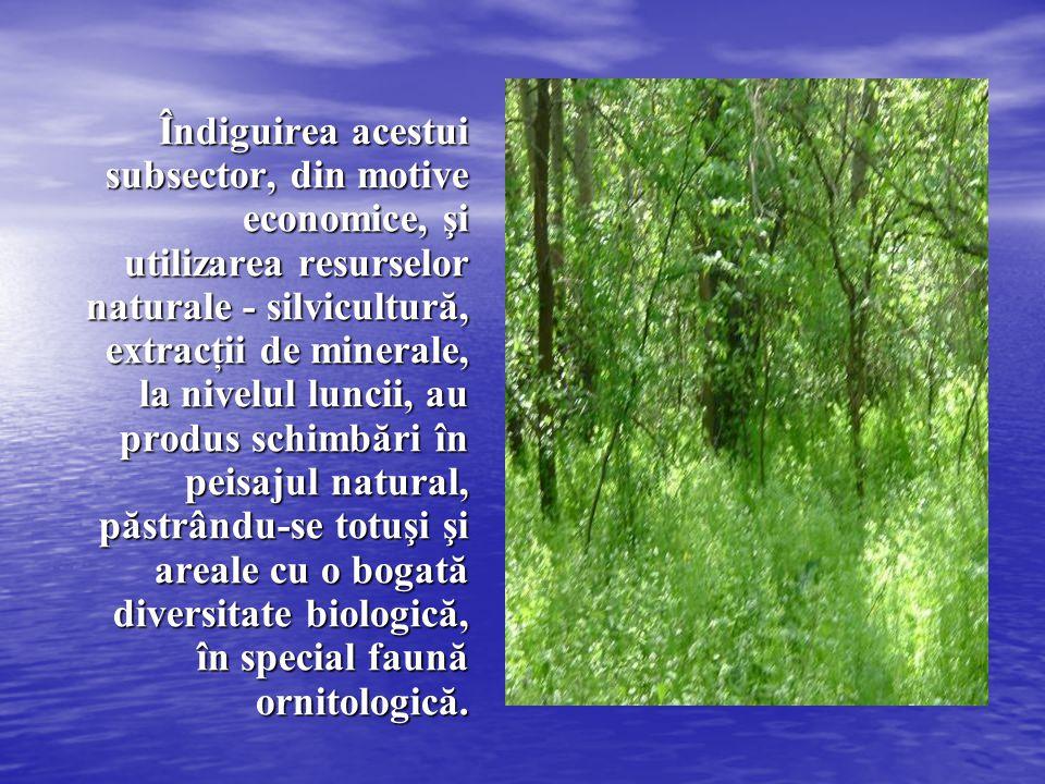 Îndiguirea acestui subsector, din motive economice, şi utilizarea resurselor naturale - silvicultură, extracţii de minerale, la nivelul luncii, au produs schimbări în peisajul natural, păstrându-se totuşi şi areale cu o bogată diversitate biologică, în special faună ornitologică.