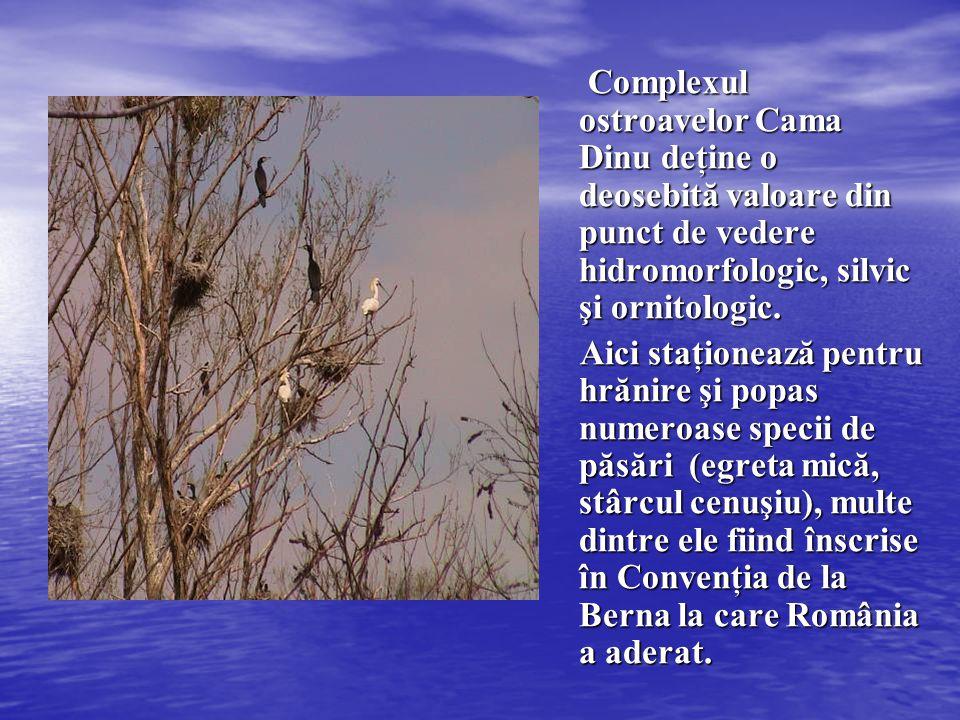 Complexul ostroavelor Cama Dinu deţine o deosebită valoare din punct de vedere hidromorfologic, silvic şi ornitologic.
