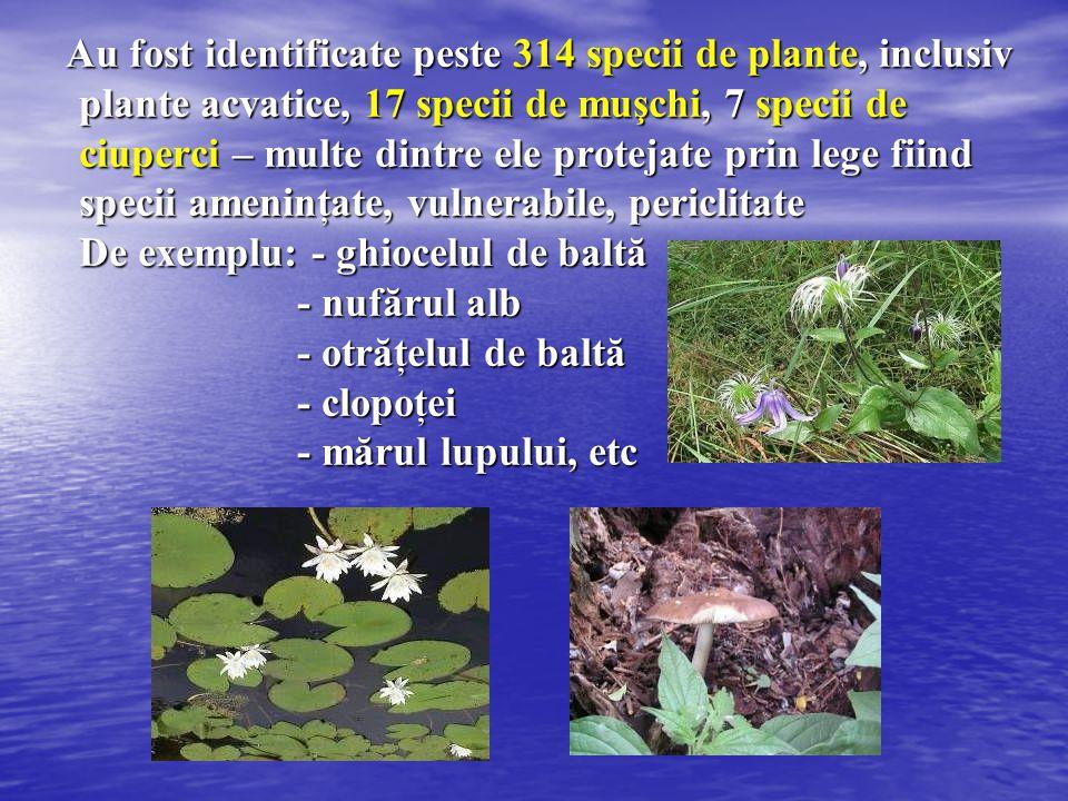 Au fost identificate peste 314 specii de plante, inclusiv plante acvatice, 17 specii de muşchi, 7 specii de ciuperci – multe dintre ele protejate prin lege fiind specii ameninţate, vulnerabile, periclitate De exemplu: - ghiocelul de baltă - nufărul alb - otrăţelul de baltă - clopoţei - mărul lupului, etc