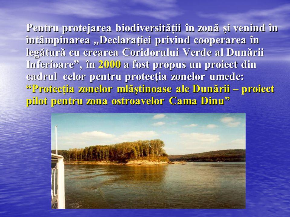 Pentru protejarea biodiversităţii în zonă şi venind în întâmpinarea ,,Declaraţiei privind cooperarea în legătură cu crearea Coridorului Verde al Dunării Inferioare , în 2000 a fost propus un proiect din cadrul celor pentru protecţia zonelor umede: Protecţia zonelor mlăştinoase ale Dunării – proiect pilot pentru zona ostroavelor Cama Dinu