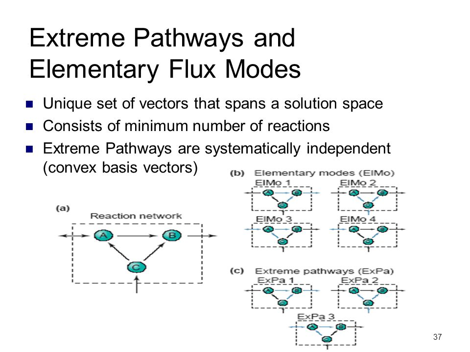 Extreme Pathways and Elementary Flux Modes