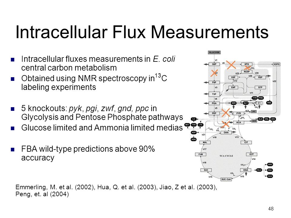 Intracellular Flux Measurements