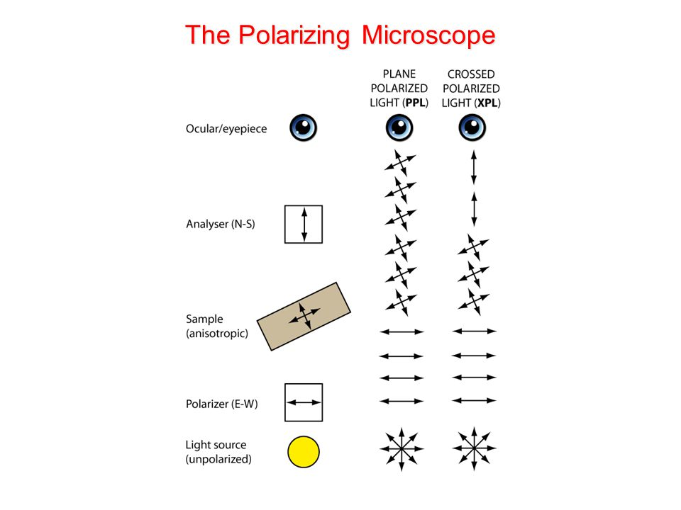 The Polarizing Microscope