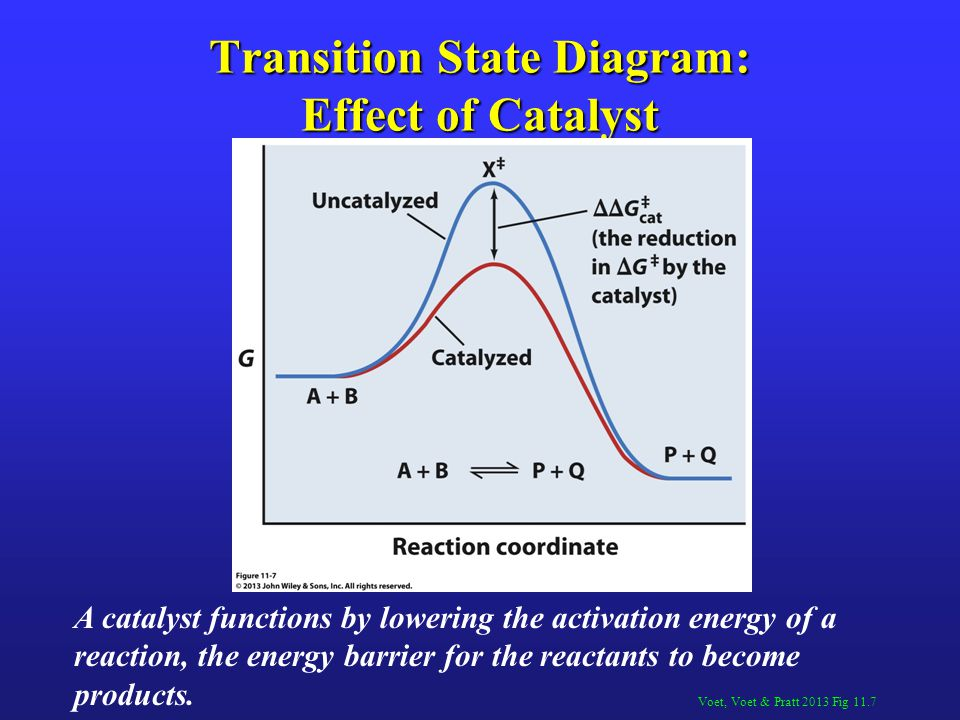 Transition State Diagram: Effect of Catalyst
