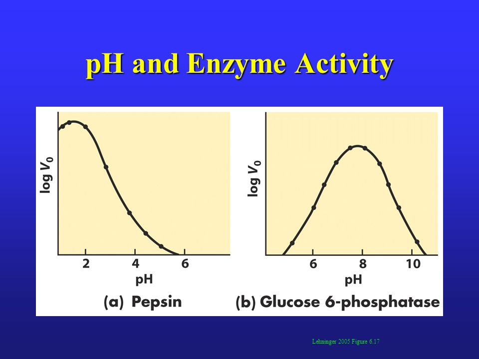 pH and Enzyme Activity Lehninger 2005 Figure 6.17