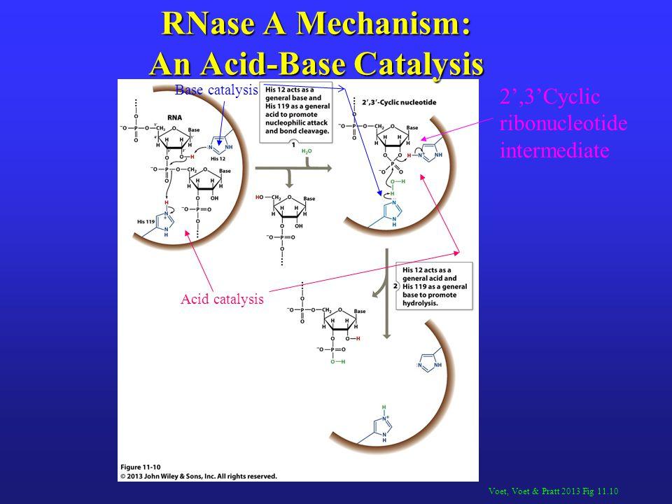 RNase A Mechanism: An Acid-Base Catalysis