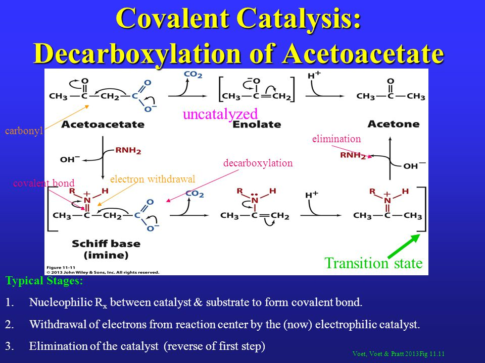 Covalent Catalysis: Decarboxylation of Acetoacetate
