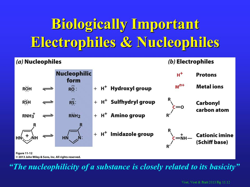 Biologically Important Electrophiles & Nucleophiles