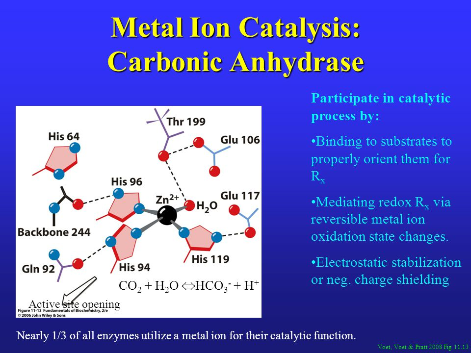 Metal Ion Catalysis: Carbonic Anhydrase