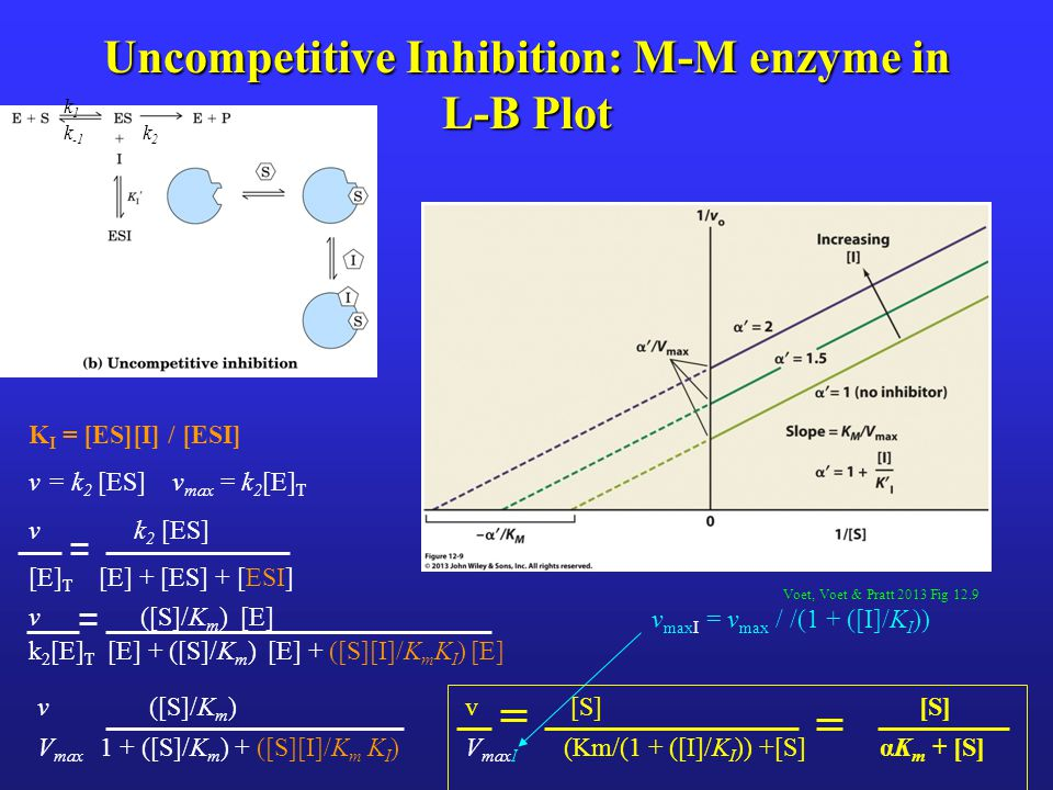 Uncompetitive Inhibition: M-M enzyme in L-B Plot