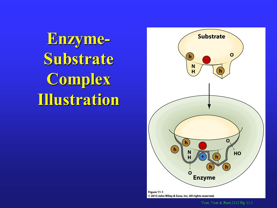 Enzyme-Substrate Complex Illustration
