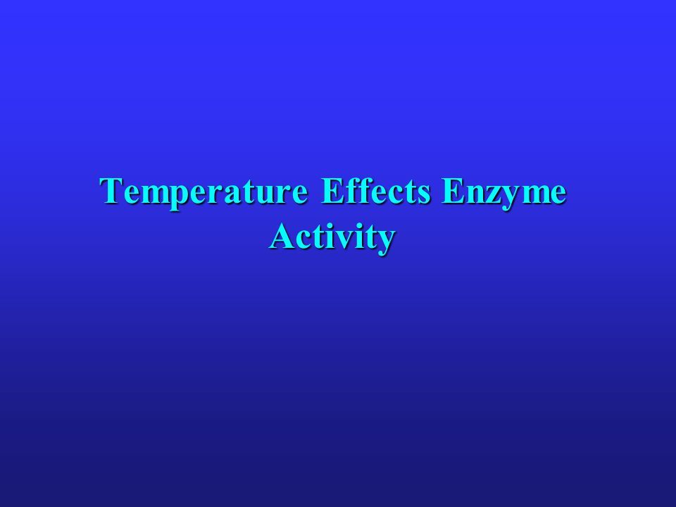 Temperature Effects Enzyme Activity