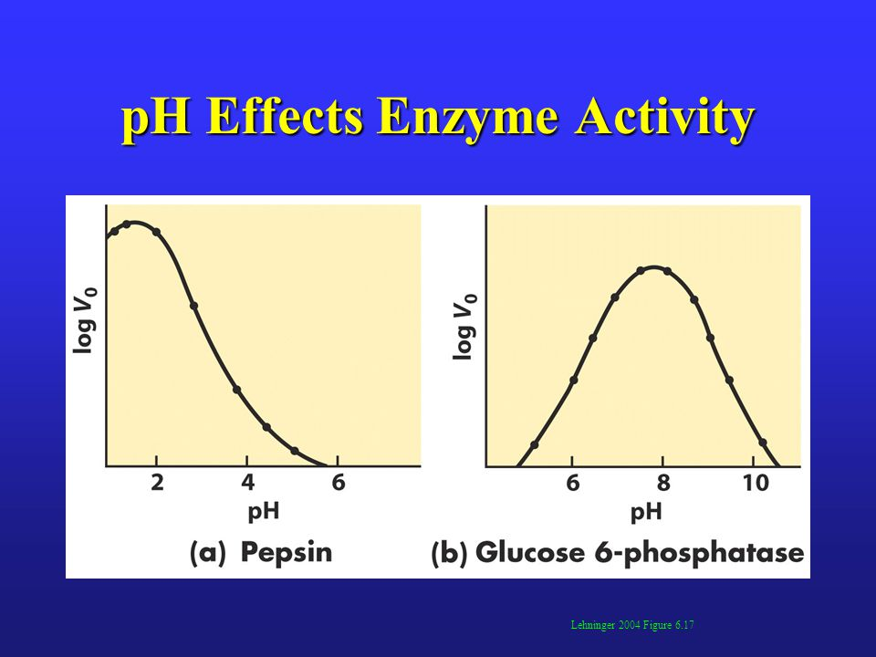 pH Effects Enzyme Activity