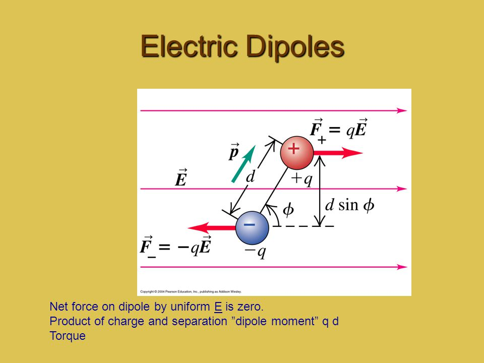 Electric Dipoles Net force on dipole by uniform E is zero.