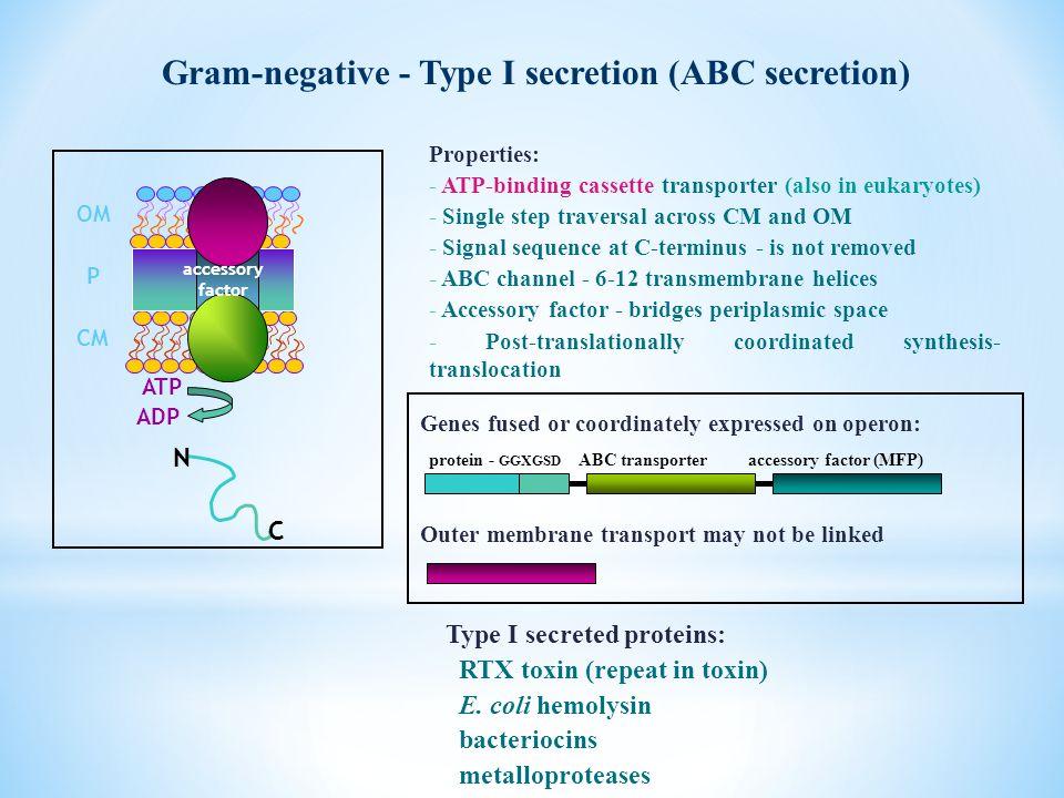 Gram-negative - Type I secretion (ABC secretion)