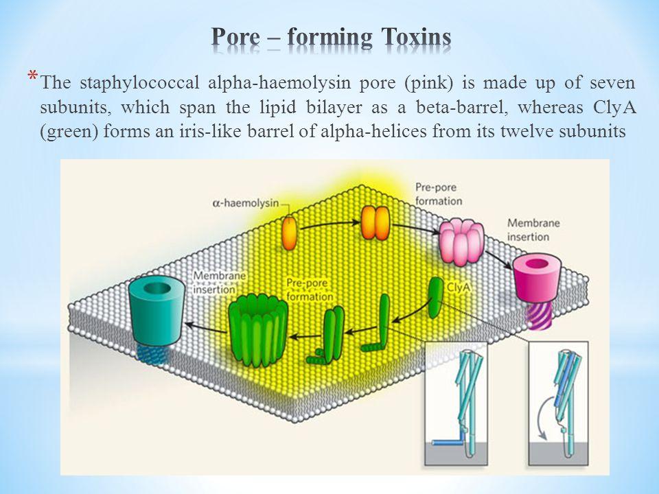 Pore – forming Toxins