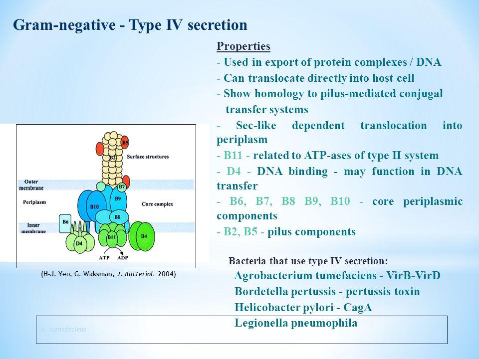 Gram-negative - Type IV secretion