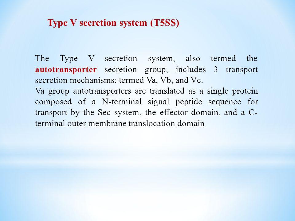 Type V secretion system (T5SS)