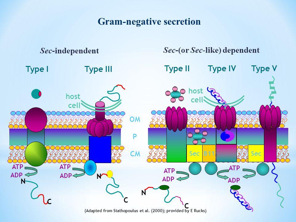 Gram-negative secretion