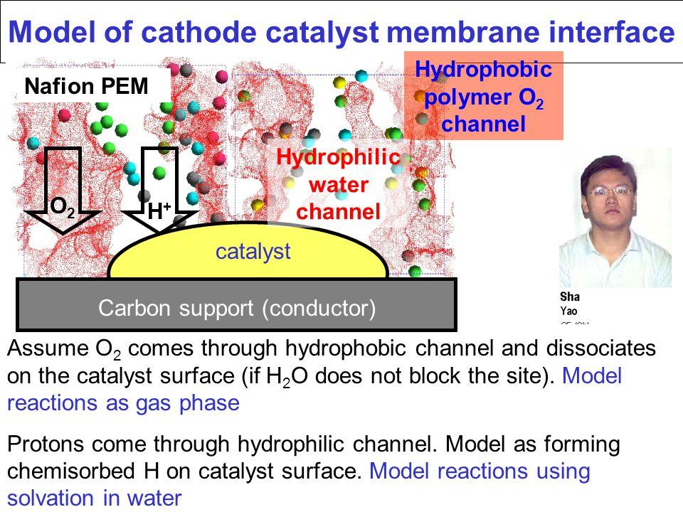 Model of cathode catalyst membrane interface