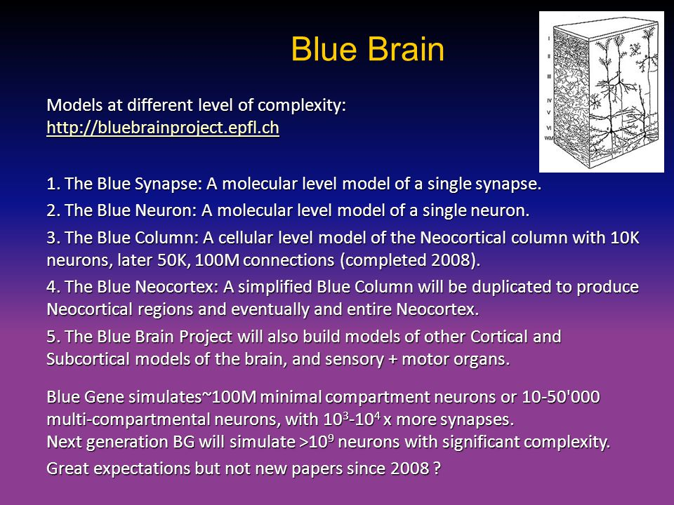 Blue Brain Models at different level of complexity: http://bluebrainproject.epfl.ch.