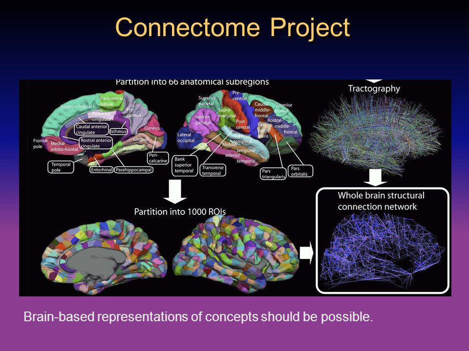 Connectome Project Brain-based representations of concepts should be possible.