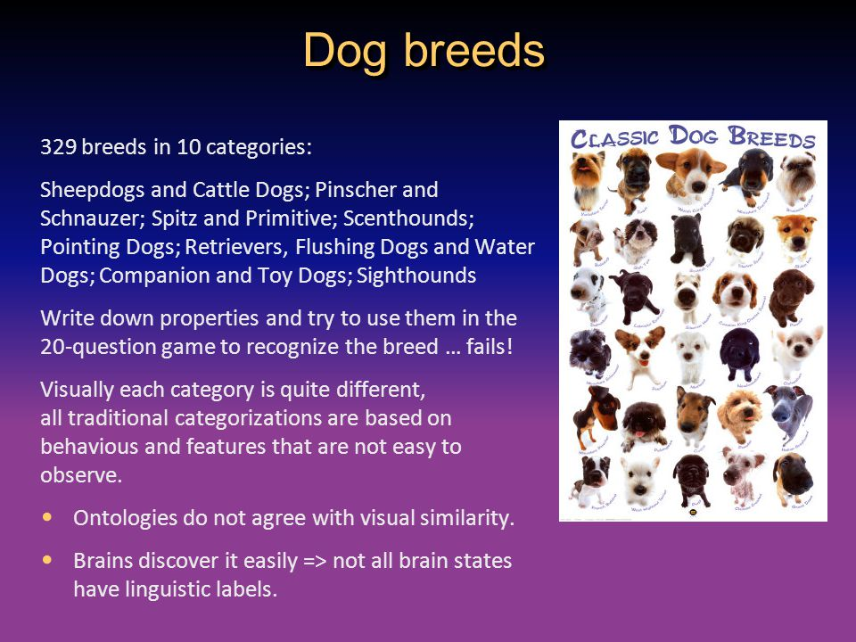 Dog breeds 329 breeds in 10 categories: