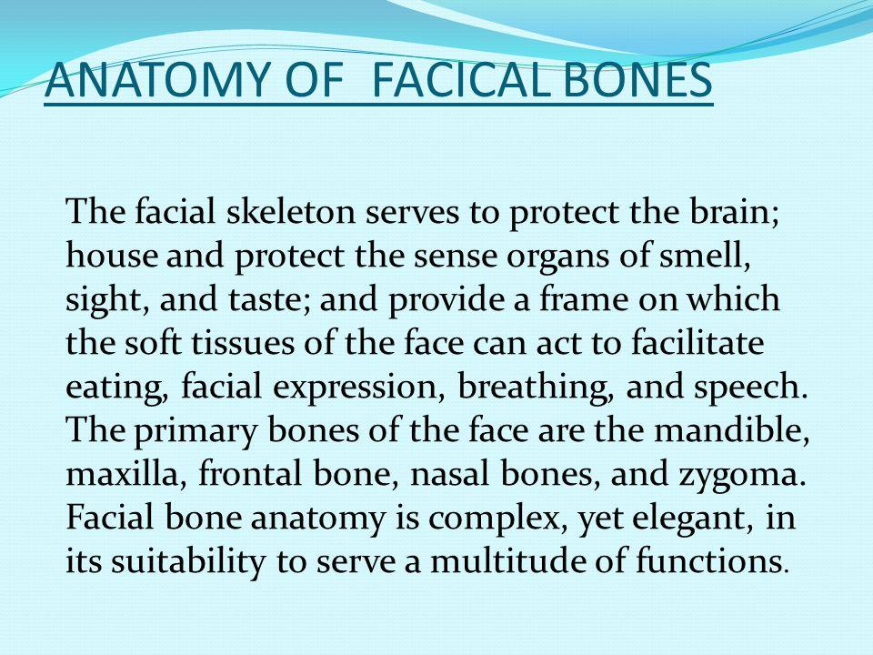 ANATOMY OF FACICAL BONES