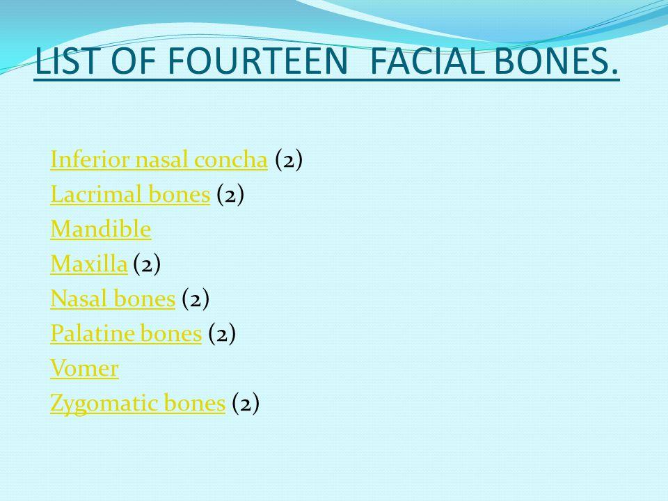 LIST OF FOURTEEN FACIAL BONES.