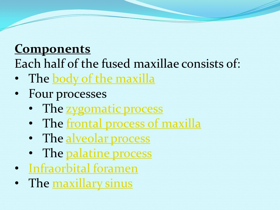 Components Each half of the fused maxillae consists of: The body of the maxilla. Four processes. The zygomatic process.