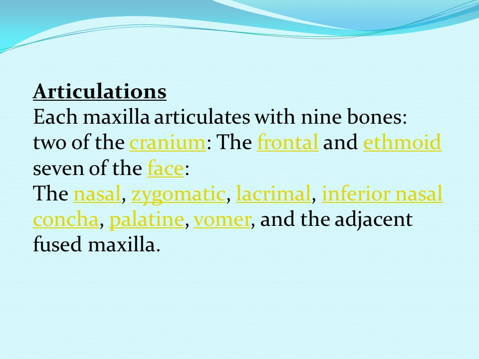 Articulations Each maxilla articulates with nine bones: two of the cranium: The frontal and ethmoid.