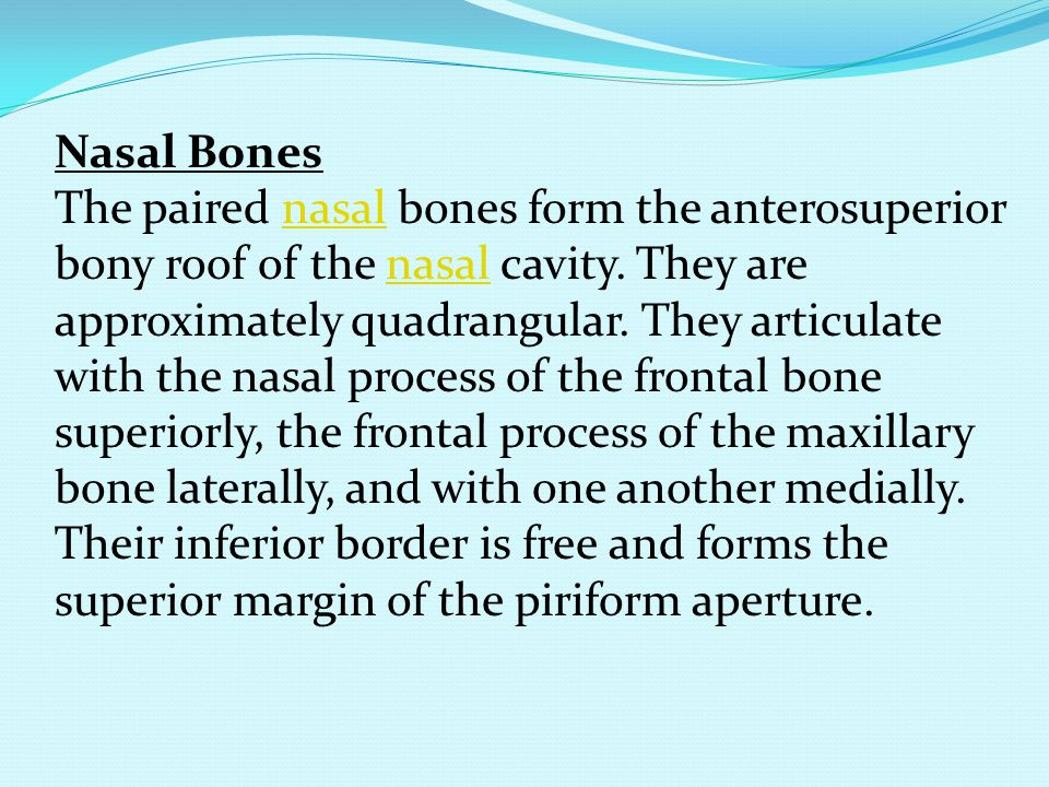 Nasal Bones