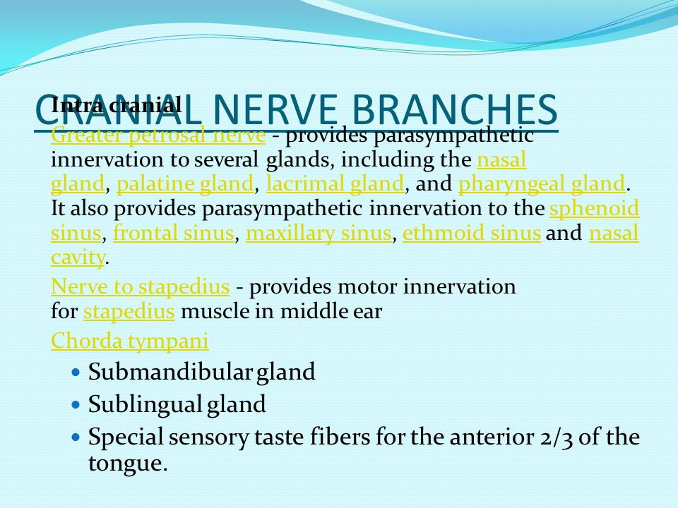 CRANIAL NERVE BRANCHES