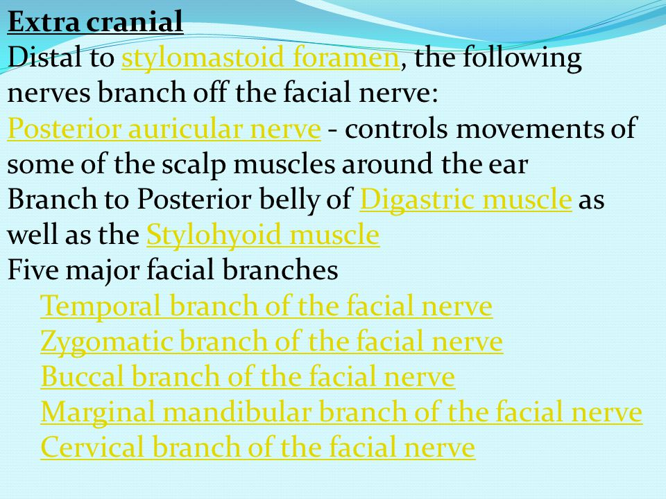 Extra cranial Distal to stylomastoid foramen, the following nerves branch off the facial nerve:
