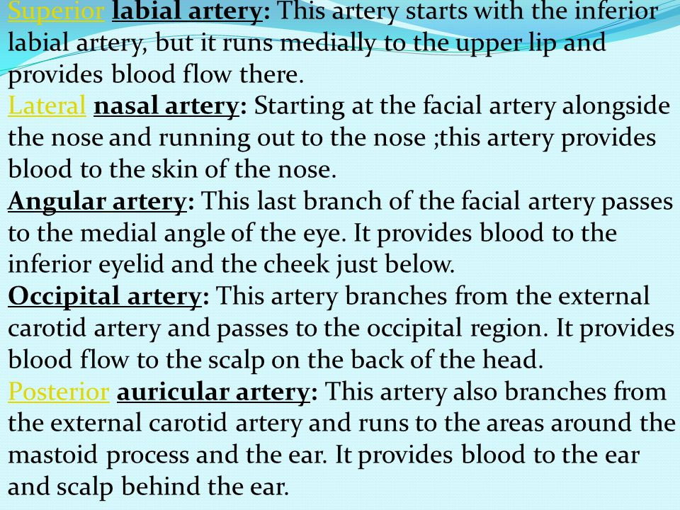 Superior labial artery: This artery starts with the inferior labial artery, but it runs medially to the upper lip and provides blood flow there.