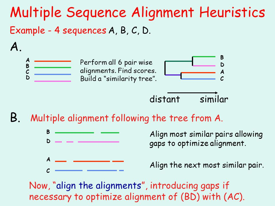 Multiple Sequence Alignment Heuristics