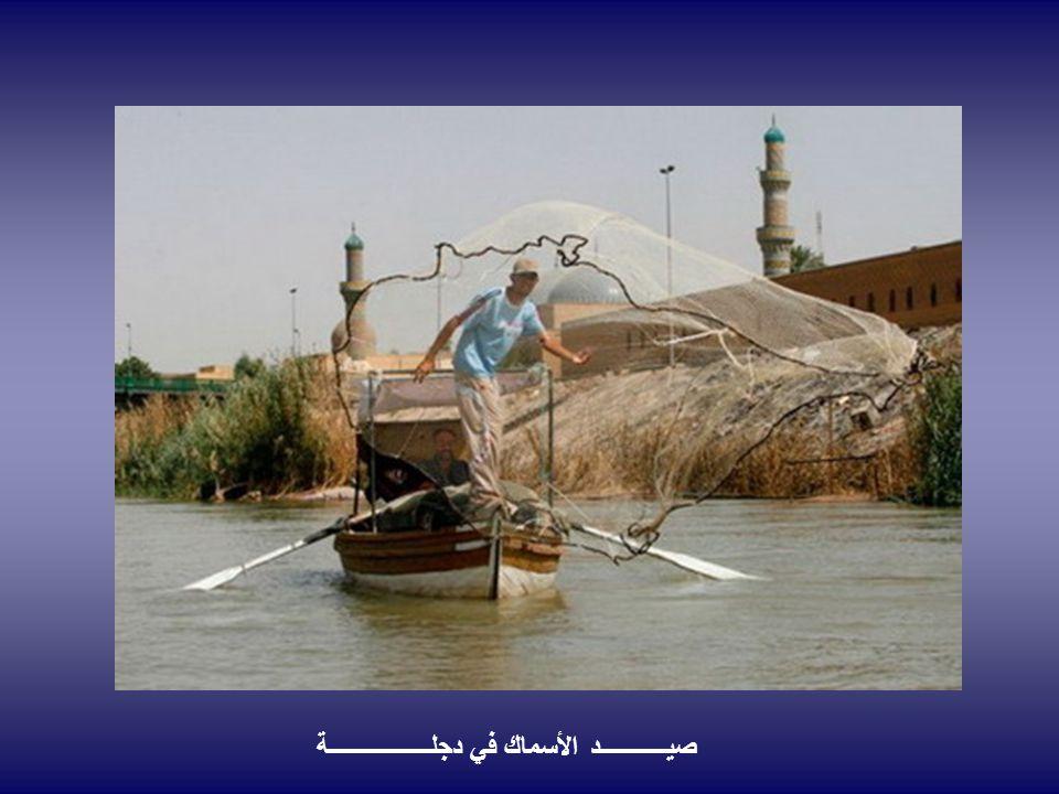 صيــــــــــــد الأسماك في دجلــــــــــــــــــة
