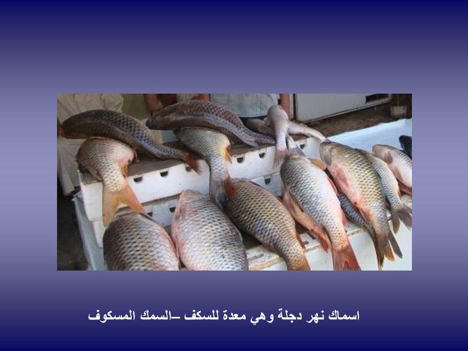 اسماك نهر دجلة وهي معدة للسكف –السمك المسكوف