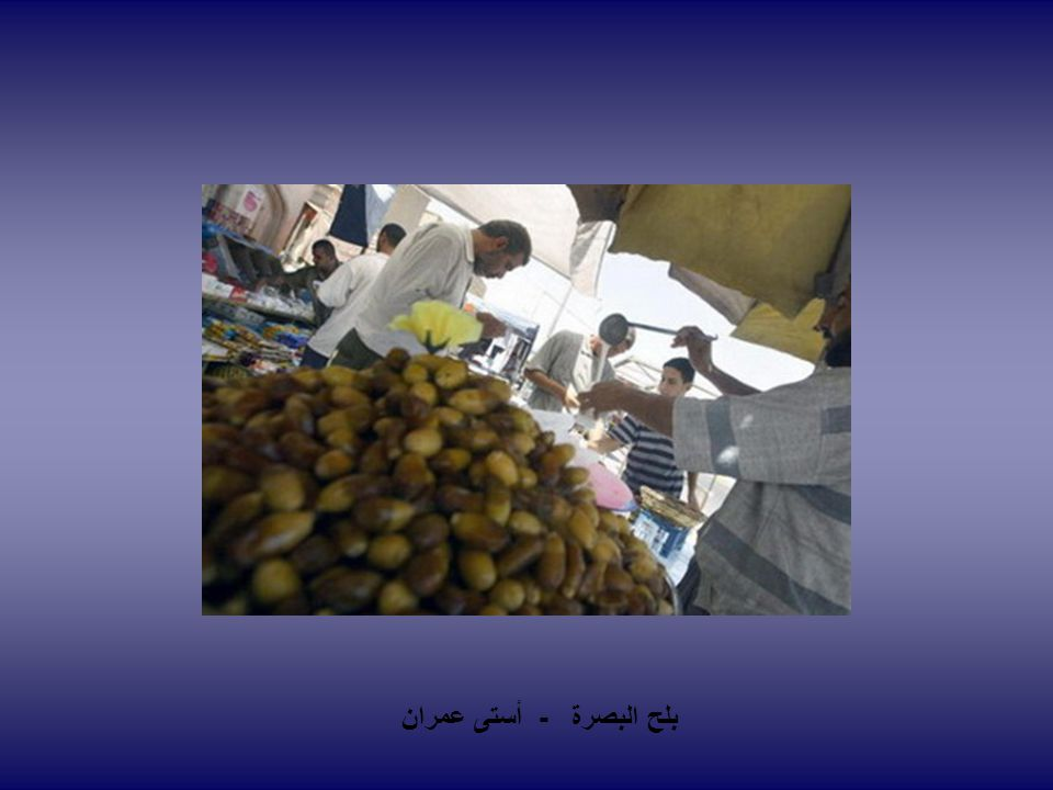 بلح البصرة - أستى عمران