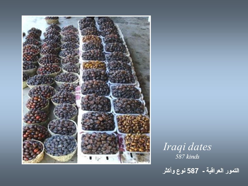 Iraqi dates 587 kinds التمور العراقية - 587 نوع وأكثر